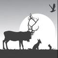 Woodland Creatures logo